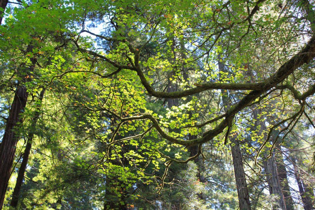 Muir Woods California1 min read