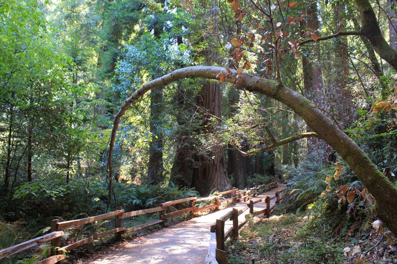 muir-woods-walkway