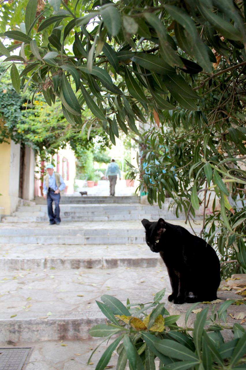 Cat in Plaka