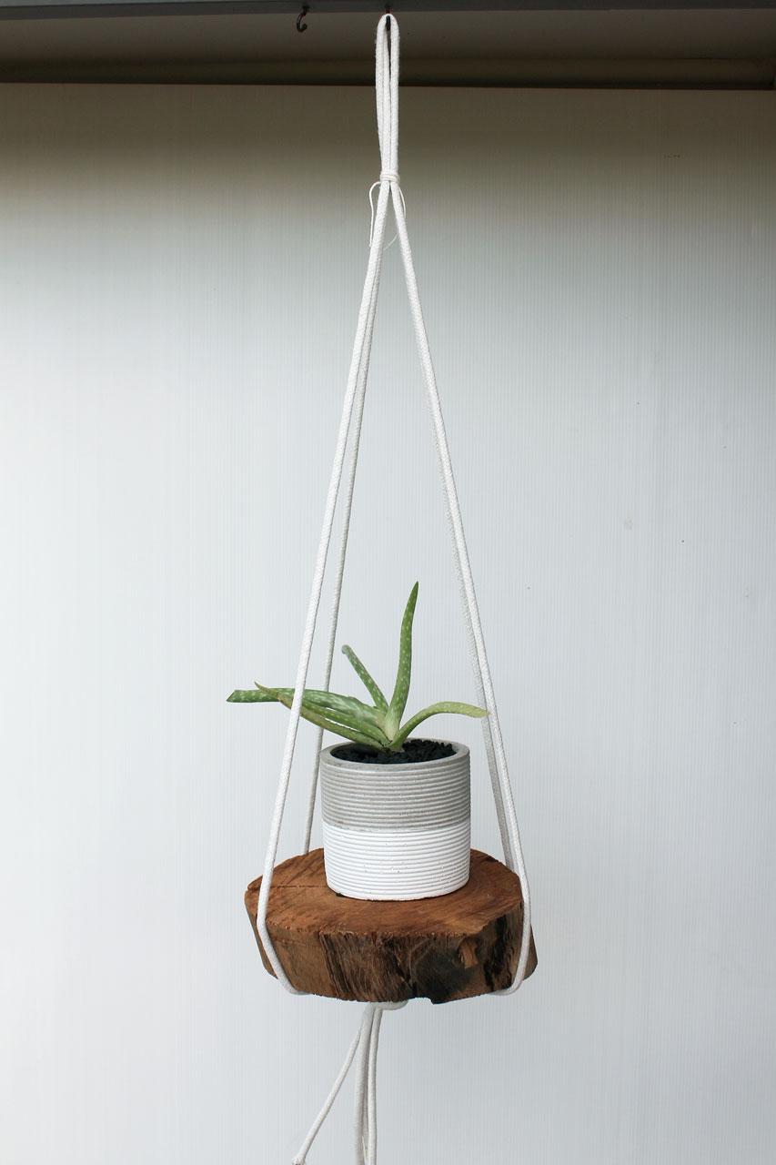 Aloe Vera succulent rope hanging planter DIY