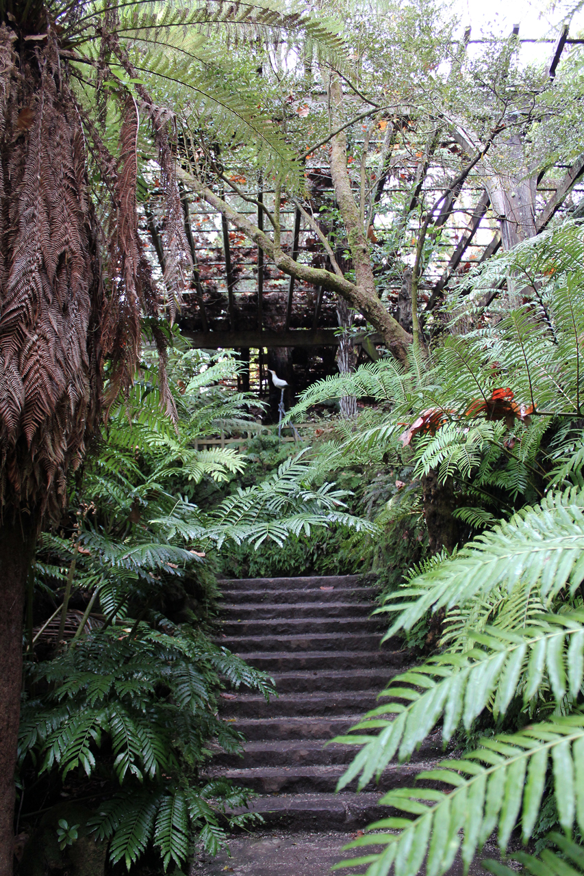 Fernery Steps Auckland