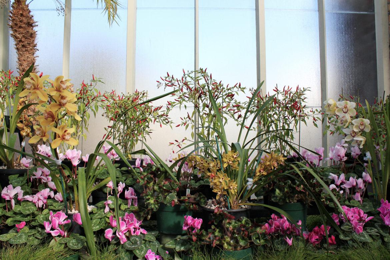Auckland Wintergardens flowers