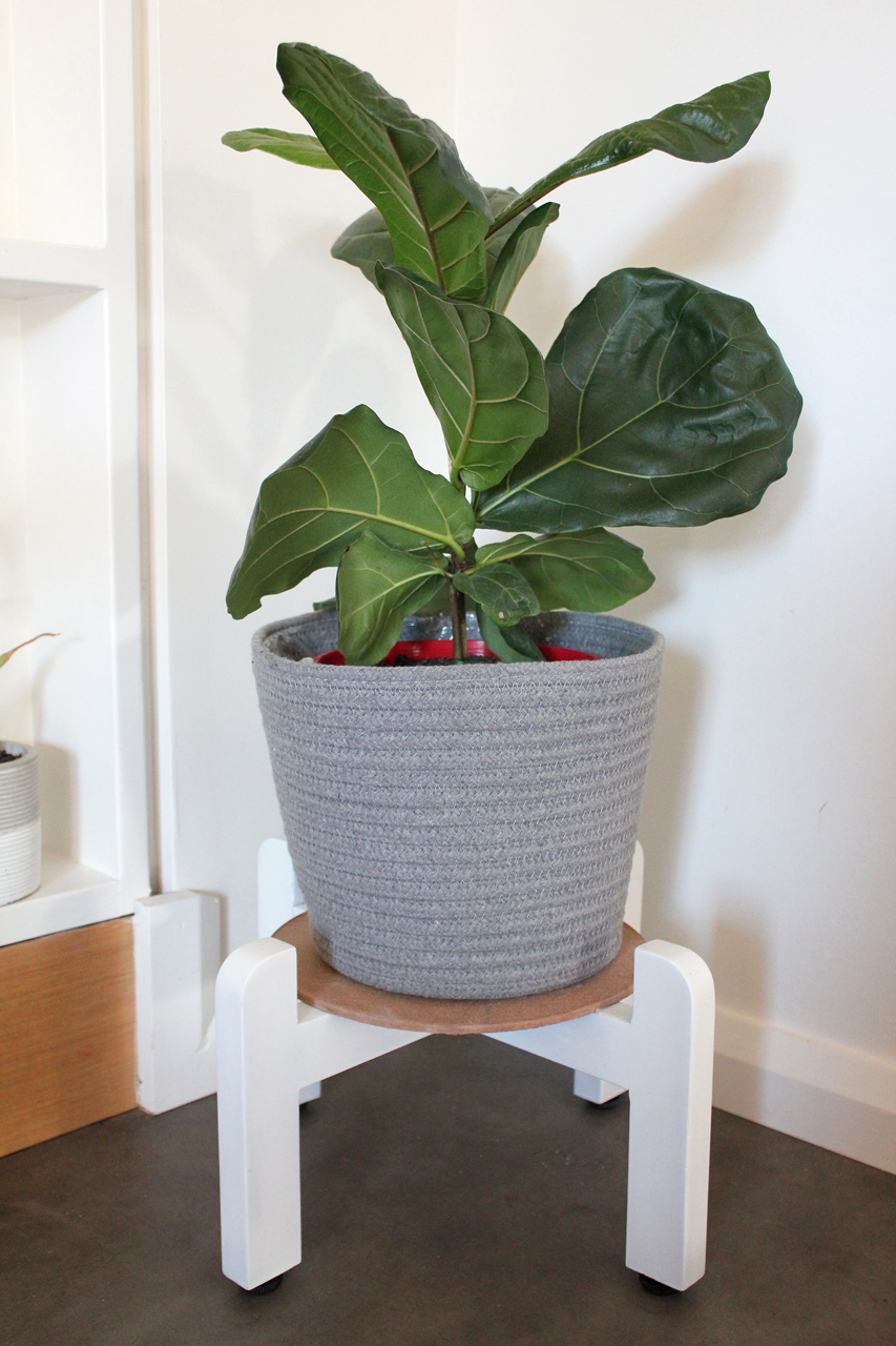 New Plant Stand with Fiddle Leaf Fig