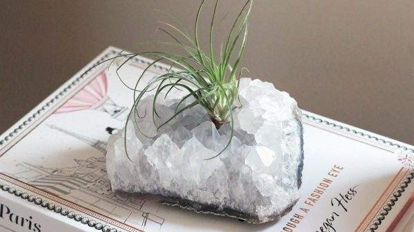 Grow a Tillandsia (air plant) on a quartz cluster crystal in a couple of simple steps | Dossier Blog