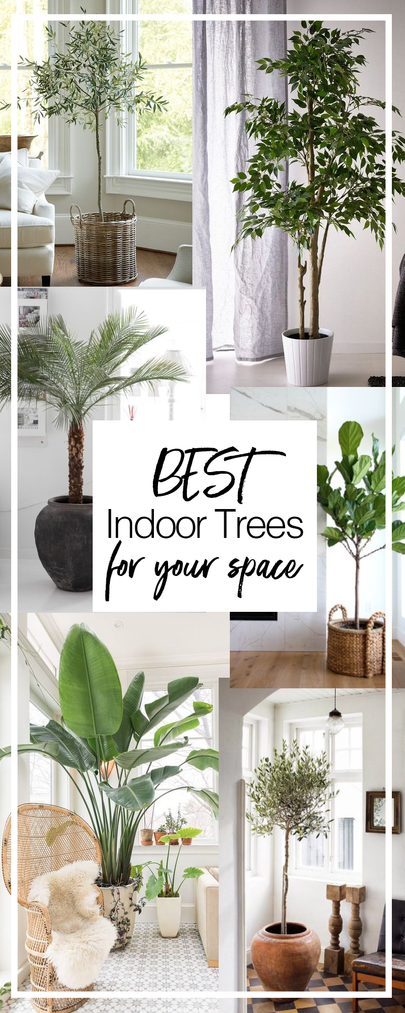 The best indoor trees for your space and how to care for each | Dossier Blog