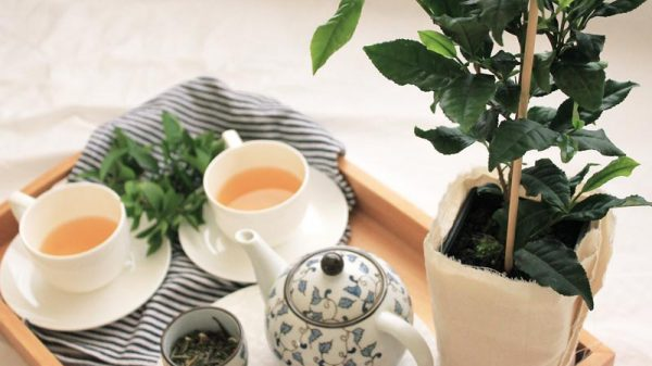 How to make your own tea at home | Dossier Blog