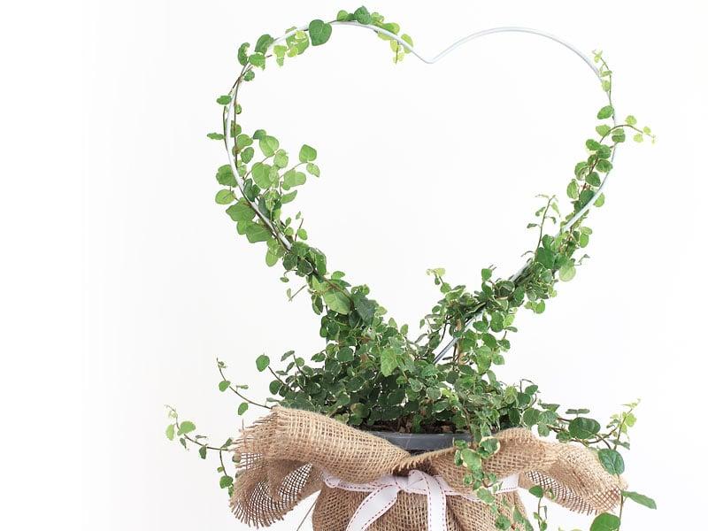 12 DIYs of Christmas #7: Make a Heart Planter Present2 min read