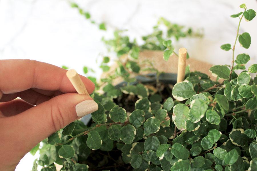 Heart Planter DIY - push stakes into pot | Dossier Blog