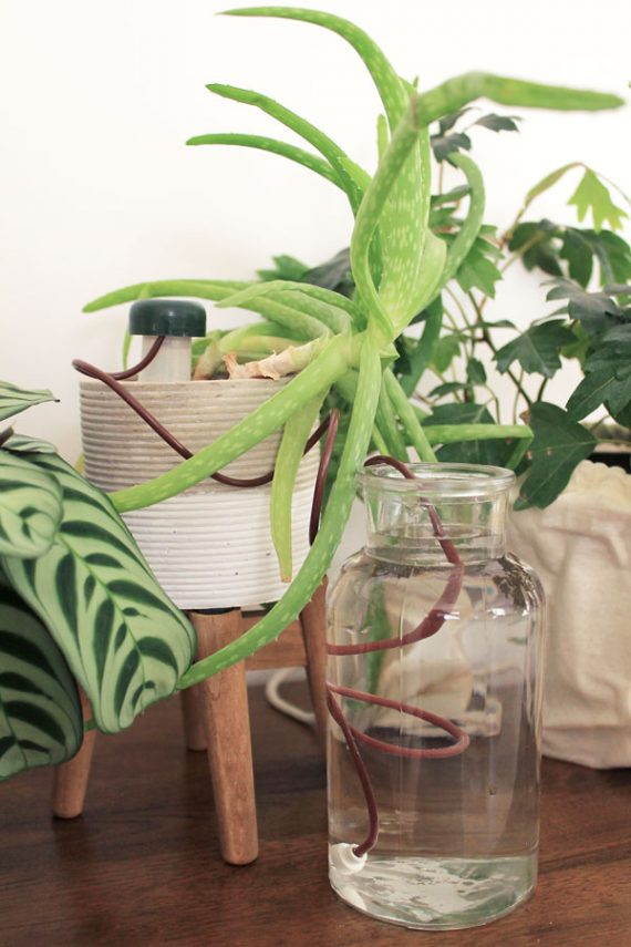 Self-watering stakes for indoor plants are a great way to keep your plants watered on vacation. | Dossier Blog