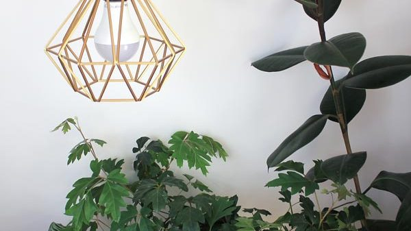 How to use grow lights for indoor plants | Dossier Blog