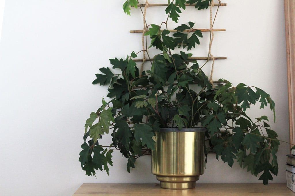 Ivy climber | Dossier Blog