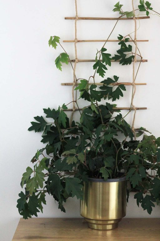 DIY Indoor plant trellis made from rope and bamboo for climbing plants | Dossier Blog