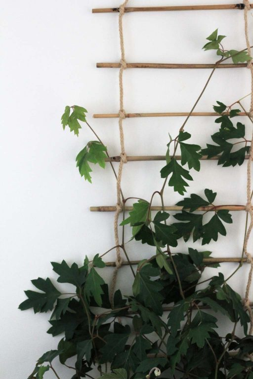 Make this easy plant trellis for your indoor climbing plants | Dossier Blog