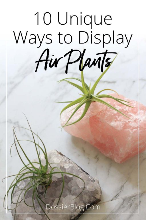 10 unique ways to display air plants | Dossier Blog