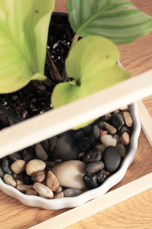 How to use a pebble tray to increase humidity | Dossier Blog