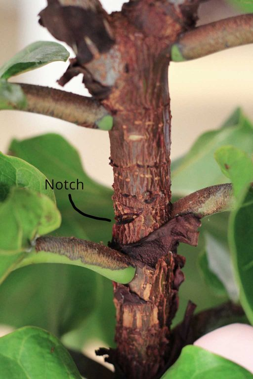 An example of how to notch a trunk | Dossier Blog