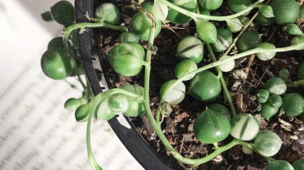 Symptoms your plants need more light   Dossier Blog