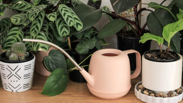 Precision tip watering can