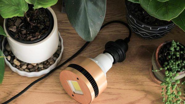 Grow light on pendant cord
