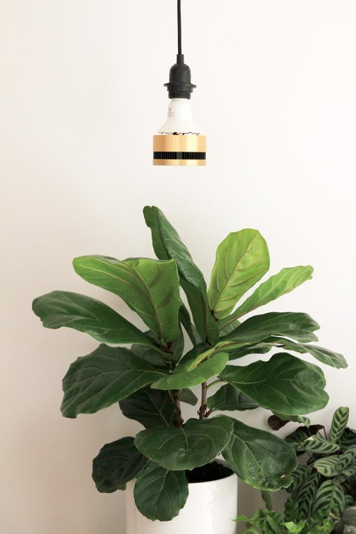 Grow light for Fiddle Leaf Fig | Dossier Blog