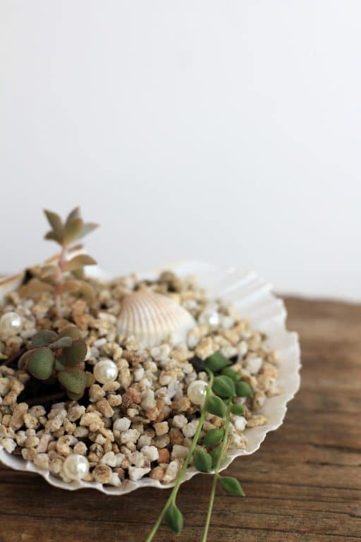 Turn a shell into a succulent garden | Dossier Blog
