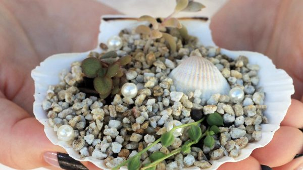 DIY mini succulent shell garden