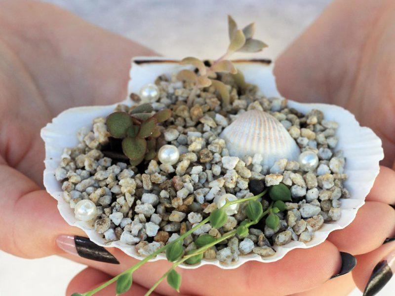 DIY mini succulent shell garden