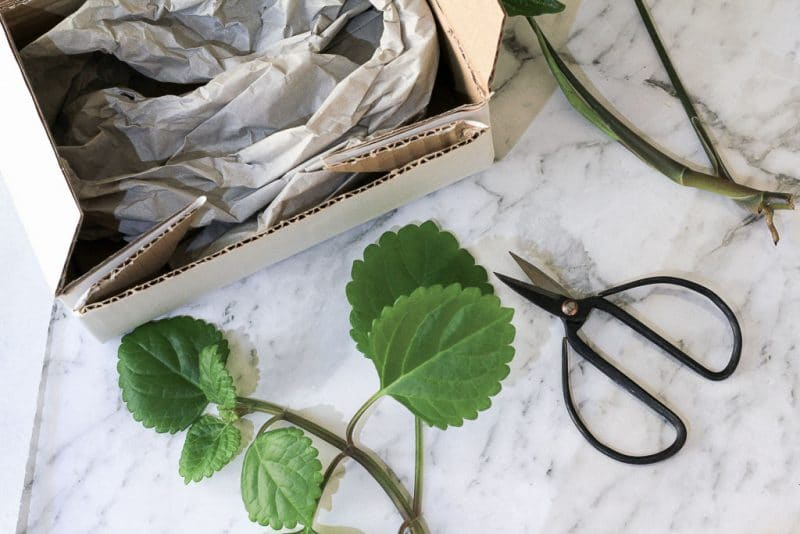 A guide to posting plant cuttings in the mail | Dossier Blog