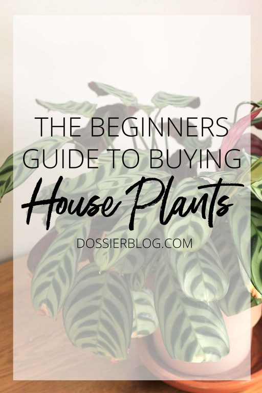 The Beginners Guide to Buying House plants | Dossier Blog