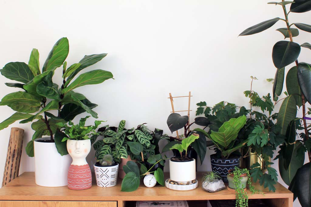 Guide to buying houseplants - plants lined up | Dossier Blog