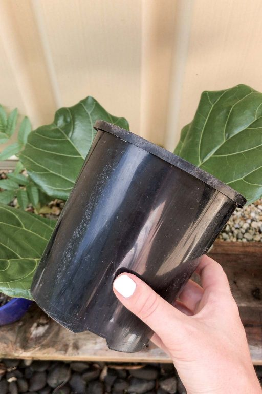Choosing the right pot for a new cutting   Dossier Blog