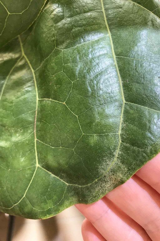 This is what spider mite damage looks like | Dossier Blog