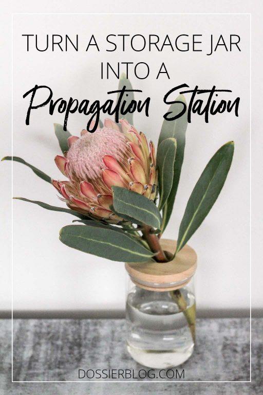 Turn a storage jar into a propagation station | Dossier Blog