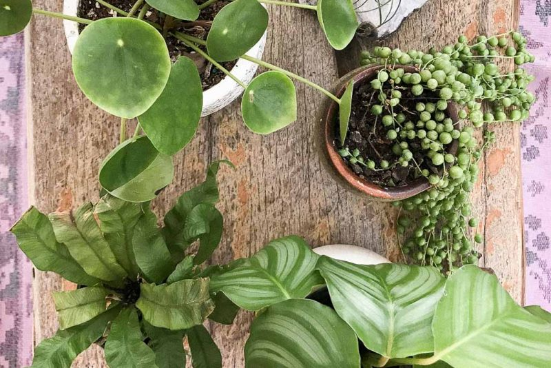 seven plants myths you can do away with | Dossier Blog