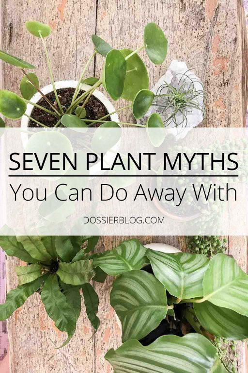 Indoor plant myths | Dossier Blog