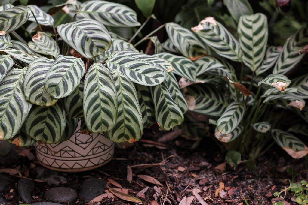 How to transition an indoor plant to outdoors | Dossier Blog